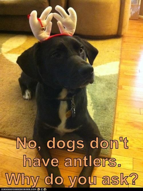 No, dogs don't have antlers.  Why do you ask?