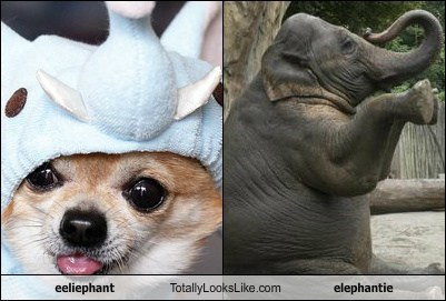 eeliephant Totally Looks Like elephantie