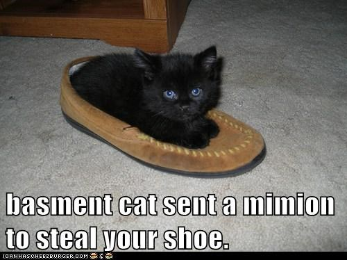 basment cat sent a mimion to steal your shoe.
