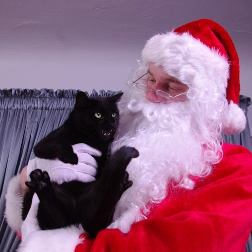 angry,cat,pet,portrait,rage,santa