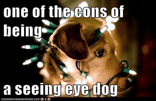 one of the cons of being  a seeing eye dog