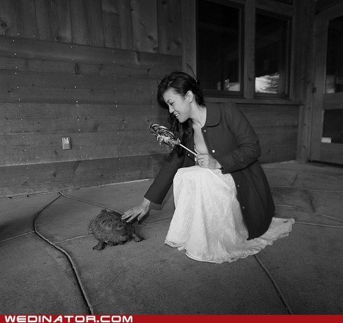 bride,funny wedding photos,turtles