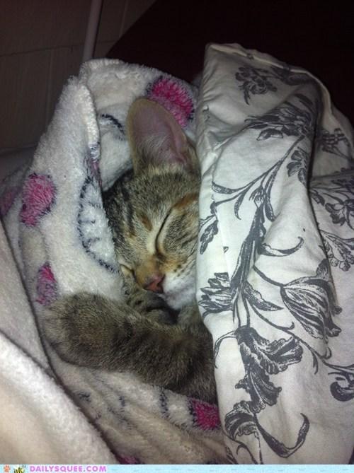 baby,bed,cat,comfortable,Hall of Fame,kitten,makeshift,pajamas,pants,pragmatism,reader squees,sleeping