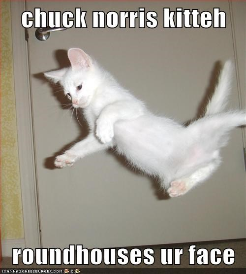 chuck norris kitteh  roundhouses ur face