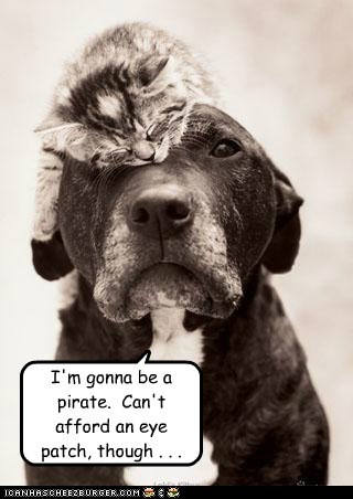 animals,cat,dogs,eye patch,i has a hotdog,kitten,Pirate