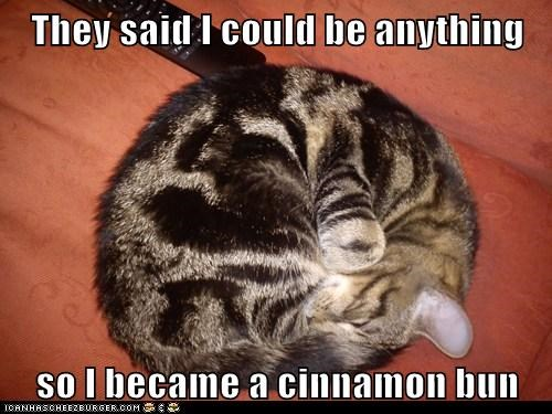 asleep,ball,became,bun,caption,captioned,cat,cinnamon,cinnamon bun,curled up,imitation,impression,meme,sleeping,so,they told me i could be anything