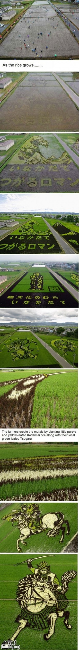 Rice Field Art WIN