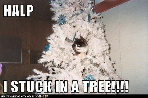 HALP  I STUCK IN A TREE!!!!