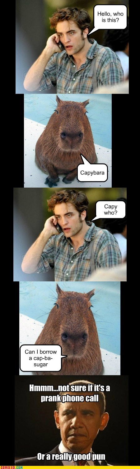 When Capybara Calls, You Answer