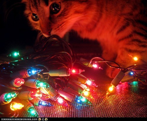 Advent Kitteh of teh Day: Sew Menne Pritty Kolorz!