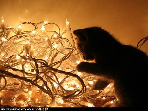 Advent Kitteh of teh Day: Plz 2 Halp Me Dekorayt Mah Tree?