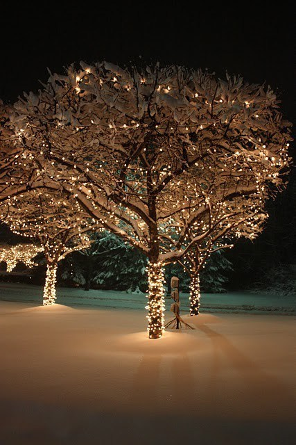 christmas,christmas lights,getaways,light in the dark,snow,trees,unknown location