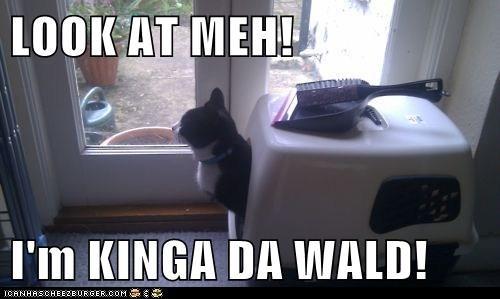 LOOK AT MEH!  I'm KINGA DA WALD!