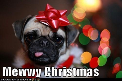 bow,christmas,merry christmas,pug,tongue,tongue out