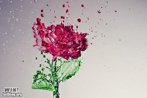 art,photography,pretty colors,rose,splash,water