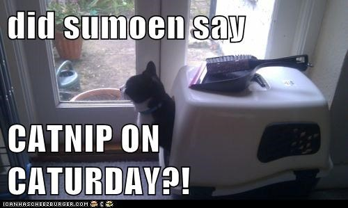 did sumoen say  CATNIP ON CATURDAY?!