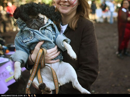 10 Hilarious Hipster Dogs