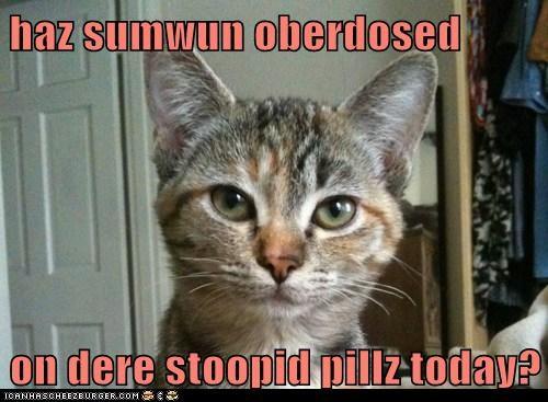 animals,cat,dumb,I Can Has Cheezburger,overdose,stupid,stupid pills