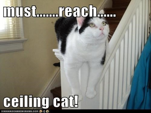 must.......reach......  ceiling cat!