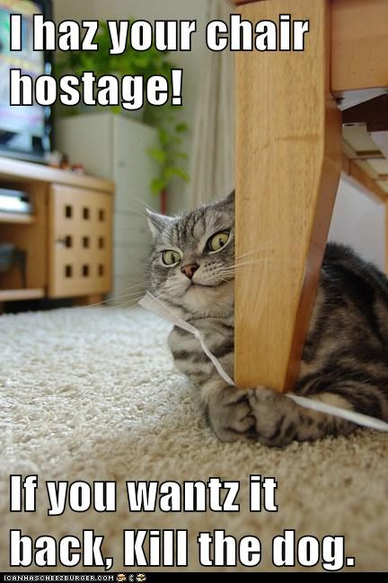caption,captioned,cat,chair,demand,dogs,hostage,i has,kill,ransom,your