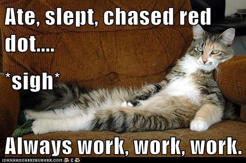 Ate, slept, chased red dot.... *sigh* Always work, work, work.
