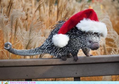 christmas,classic,coendou,costume,dressed up,hat,mascot,santa claus