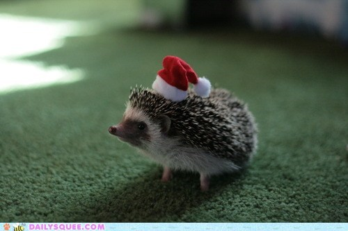 angels we have heard on high,christmas,costume,dressed up,hat,hedgehog,lyrics,parody,santa hat,song