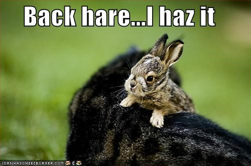 Back hare...I haz it
