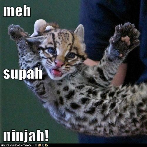 meh supah ninjah!