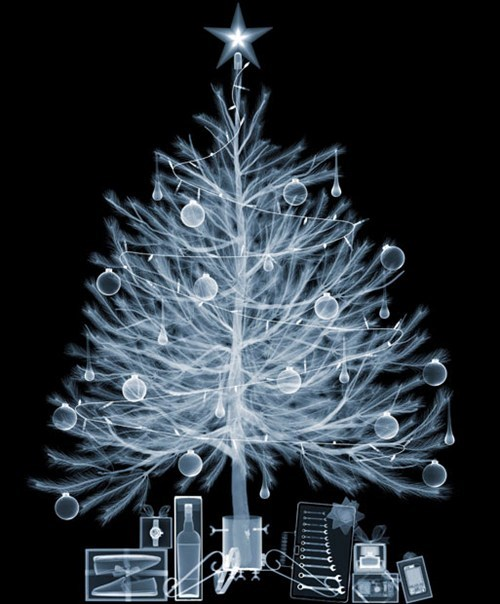 christmas,christmas tree,photos,presents,x ray