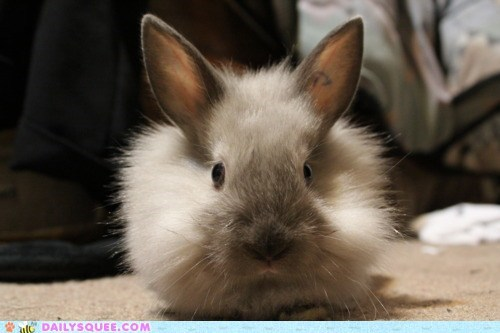 bunny,expression,face,grumpy,happy bunday,rabbit,Staring,stern,upset