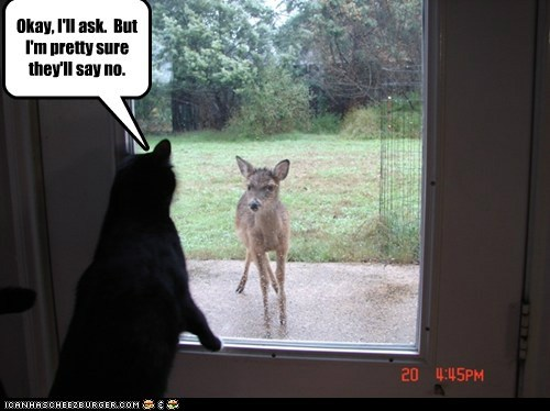 ask,caption,captioned,Cats,deer,door,doors,glass,Interspecies Love,no,permission,rain,windows