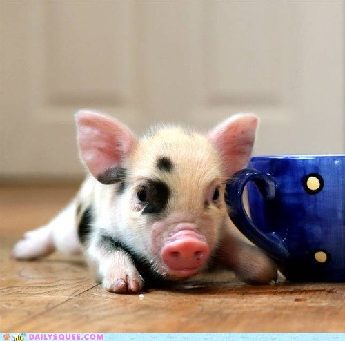 accoutrement,baby,pig,piglet,served,service,size,tea,teacup,tiny