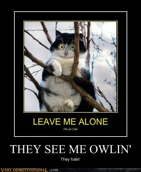 cat,hilarious,Owl,wtf
