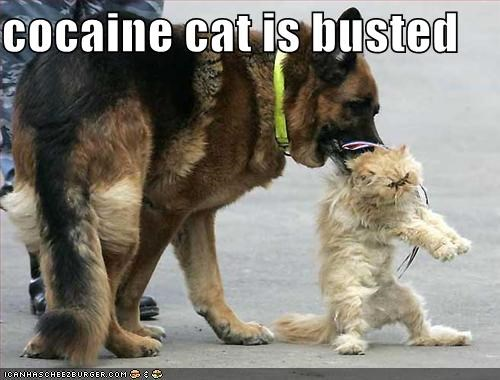 c0caine cat is busted