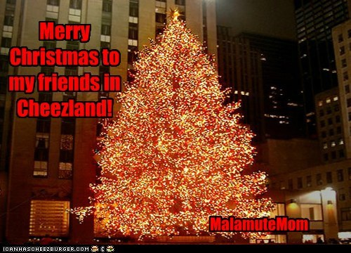 Merry Christmas from MalamuteMom!