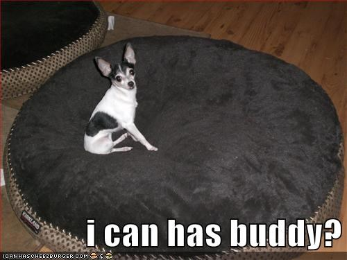alone,buddy,chihuahua,friends,i need a friend,lonely