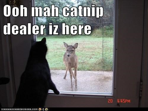 animals,cat,catnip,dealer,deer,drug dealer,drugs,I Can Has Cheezburger