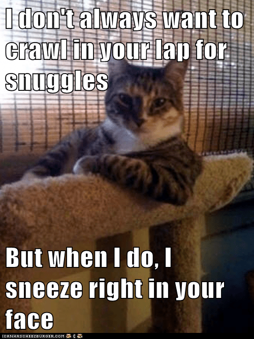The Most Interesting Cat in the World: Thanks for That