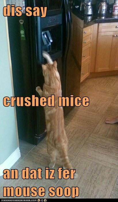 dis say crushed mice an dat iz fer mouse soop