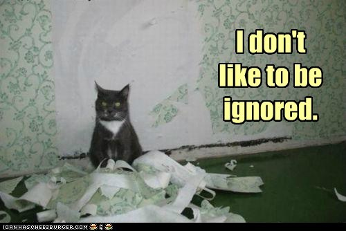 attention,best of the week,caption,captioned,Cats,destruction,disaster,Hall of Fame,ignored,ignoring,mess,unhappy,wallpaper