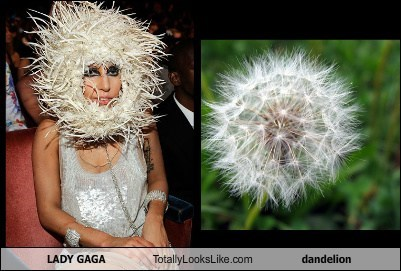 Lady Gaga Totally Looks Like Dandelion