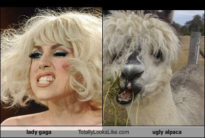 Lady Gaga  Totally Looks Like Ugly Alpaca