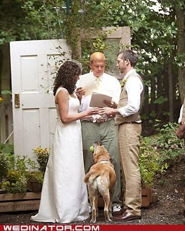 ball,bride,dogs,funny wedding photos,groom,Hall of Fame