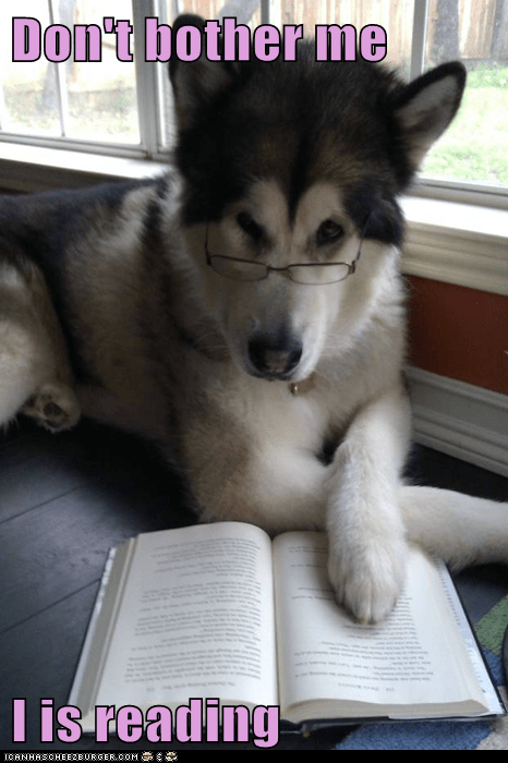 Don't bother me  I is reading