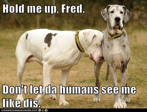 Hold me up, Fred.  Don't let da humans see me like dis.