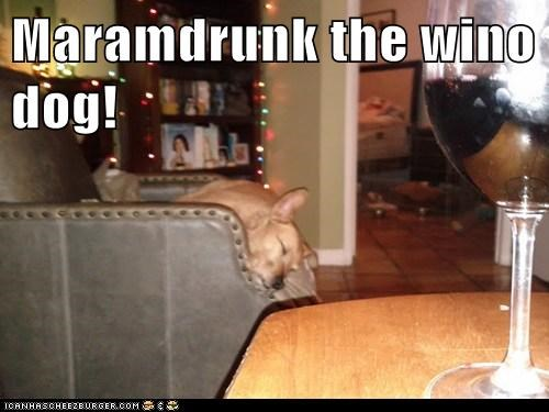 alcohol,asleep,drunk,passed out,whatbreed,wine,wino