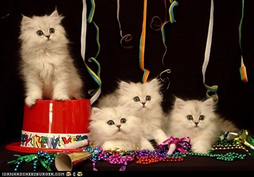 Cyoot Kittehs of teh Day: Happeh Noo Yeerz!