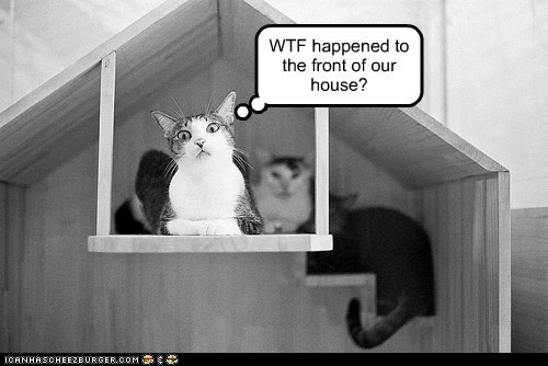 caption,captioned,cat,Cats,confused,front,happened,house,question,what,wtf