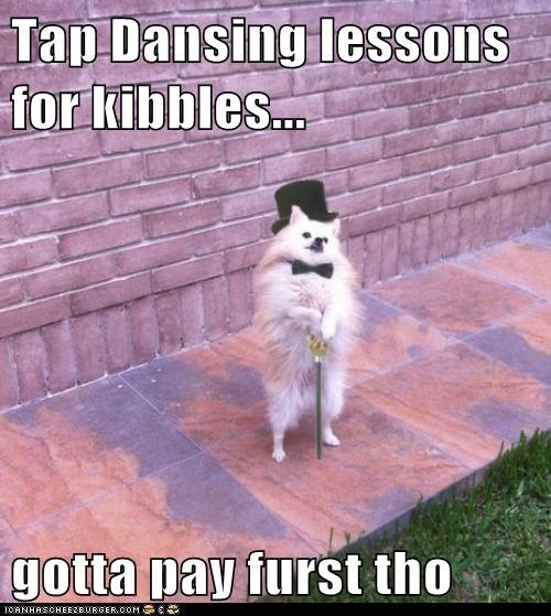 cane,dog food,kibble,pomeranian,tap dance,tap dancing,tap dancing lessons,top hat